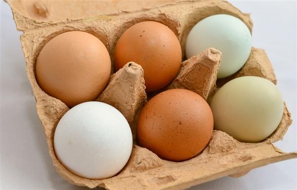 Google翻译出错 挪威奥运代表团多买1.35万个鸡蛋